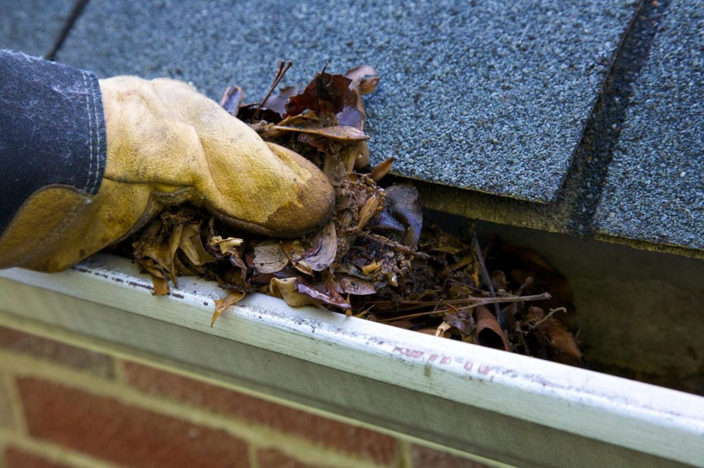 Close up of a hand wearing a work glove pulling leaves out of a gutter