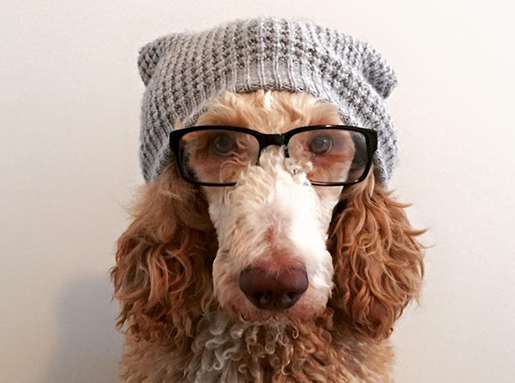 A light tan dog with brown ears wearing a grey knit hat and a pair of glasses