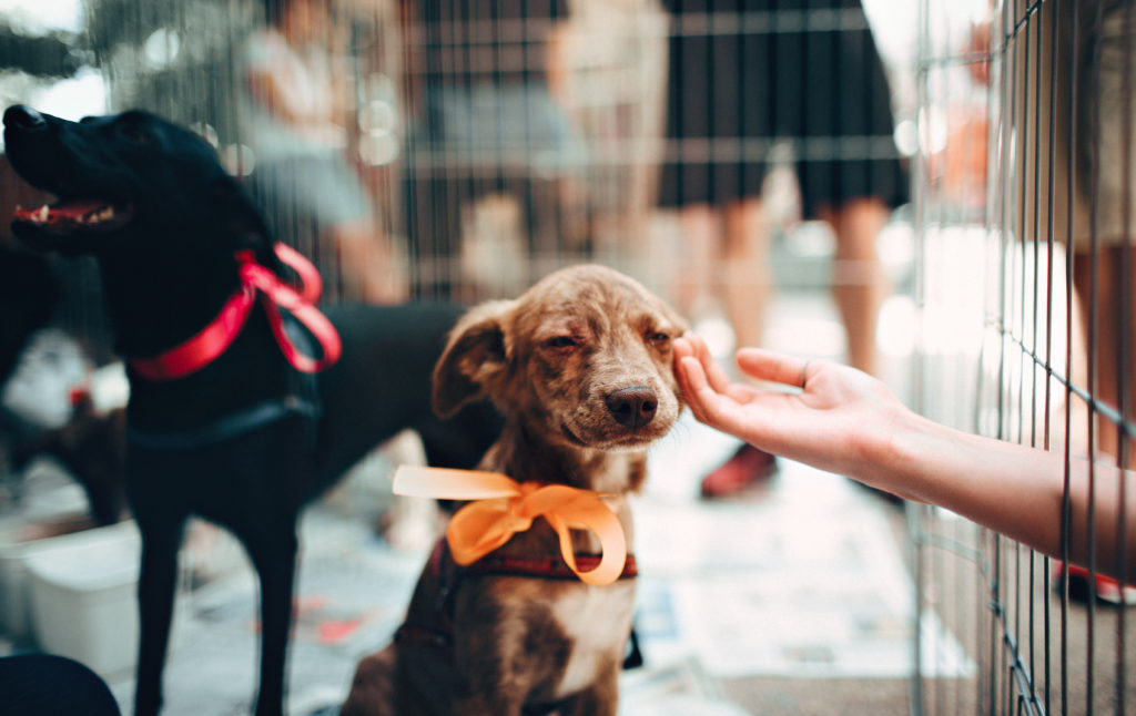 Brown dog wearing an orange ribbon around its neck getting petted on its head